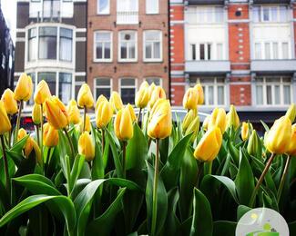1 Марта-День весны !